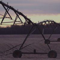 bg_sgp_agricola